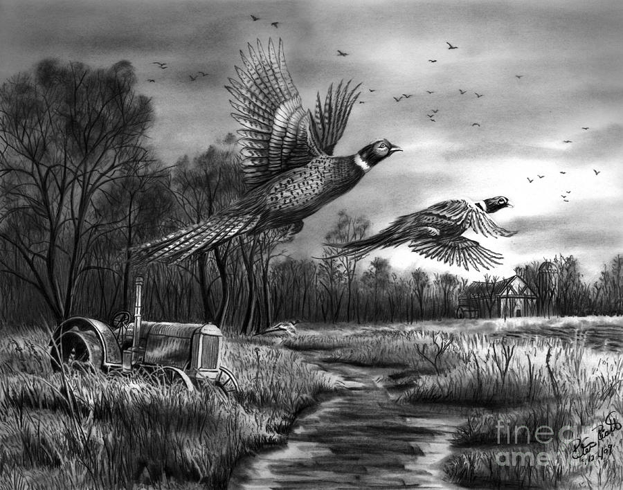 Taking Flight  Drawing  - Taking Flight  Fine Art Print