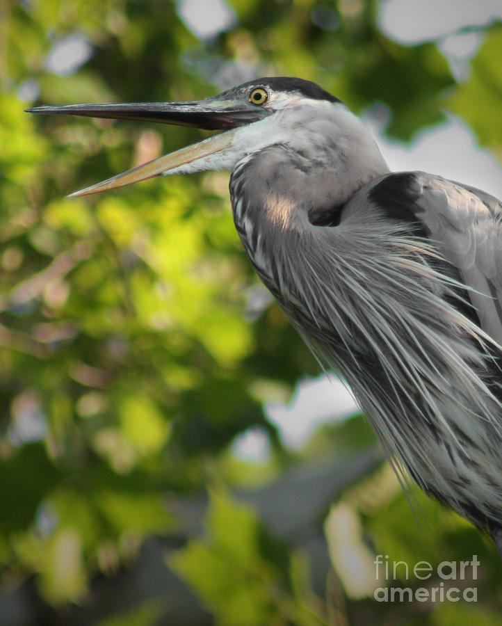 Talking Heron Photograph  - Talking Heron Fine Art Print