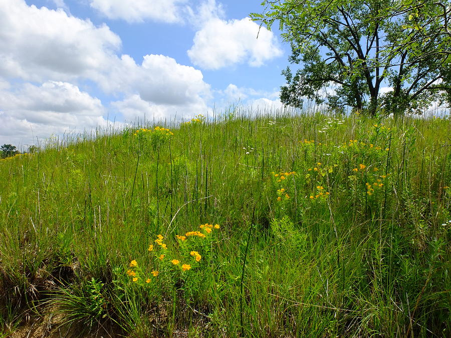 Tall Grass Hillside Photograph