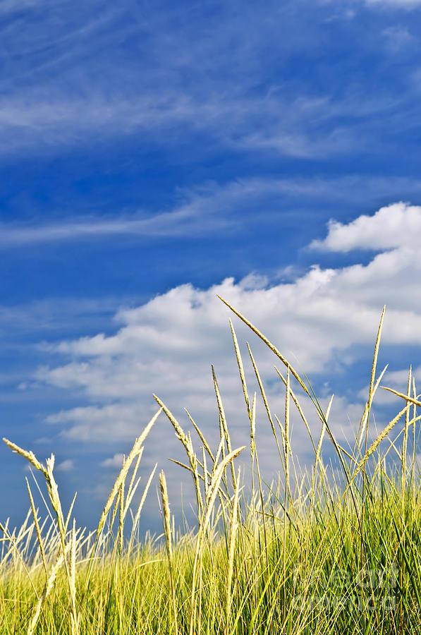 Tall Grass On Sand Dunes Photograph