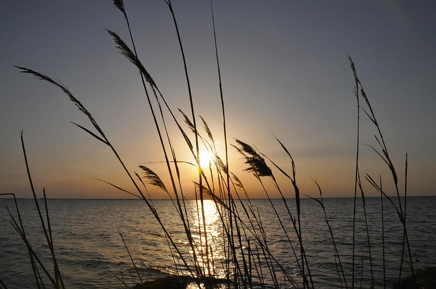 Tall Grass Sunset Photograph  - Tall Grass Sunset Fine Art Print