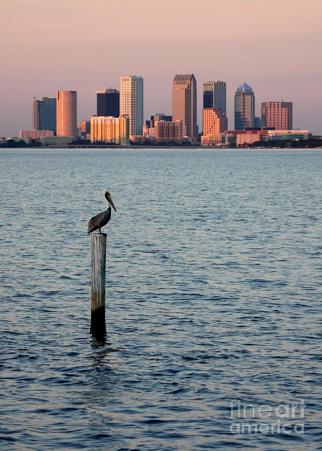 Tampa Skyline And Pelican Photograph