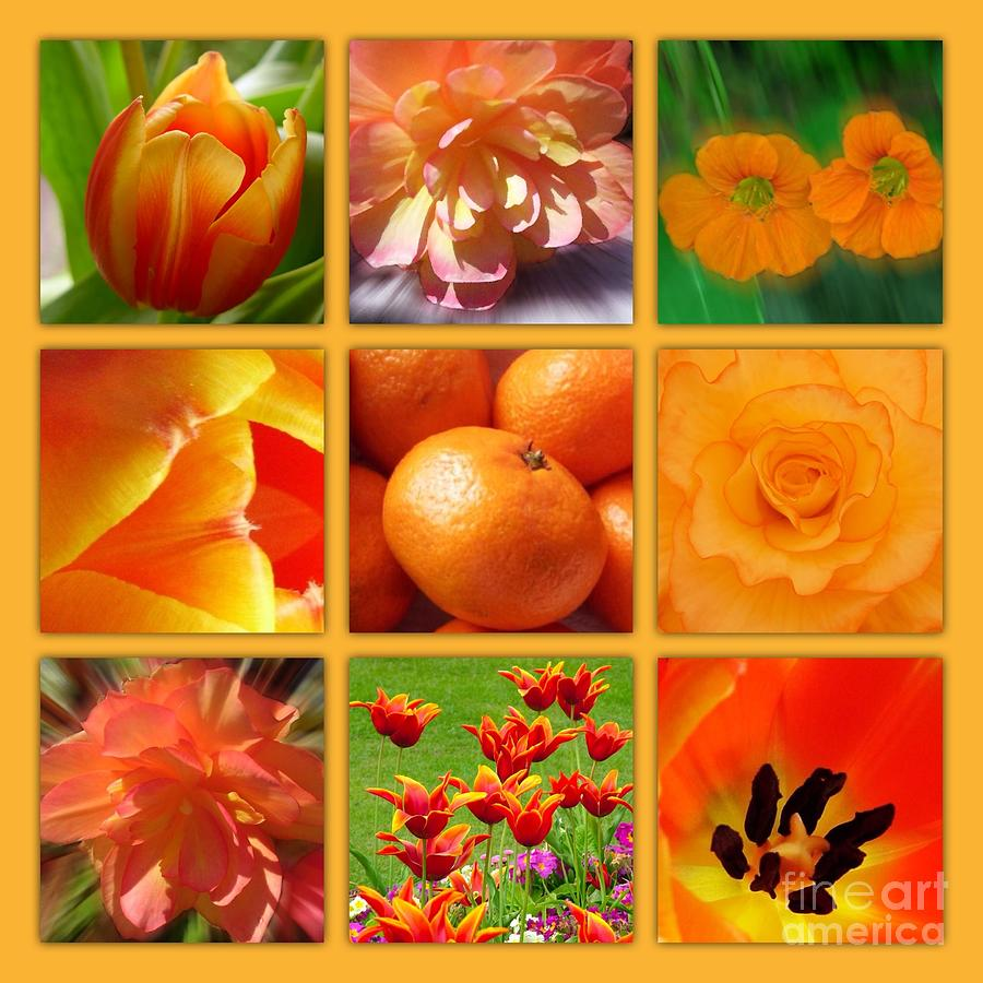 Orange Blossoms Photograph - Tangerine Dream Window by Joan-Violet Stretch