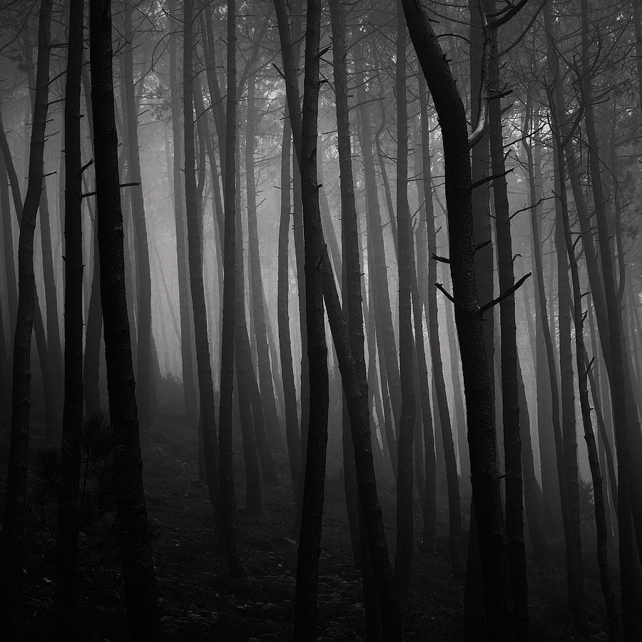 Forest Photograph - Tangled by Antonio Jorge Nunes