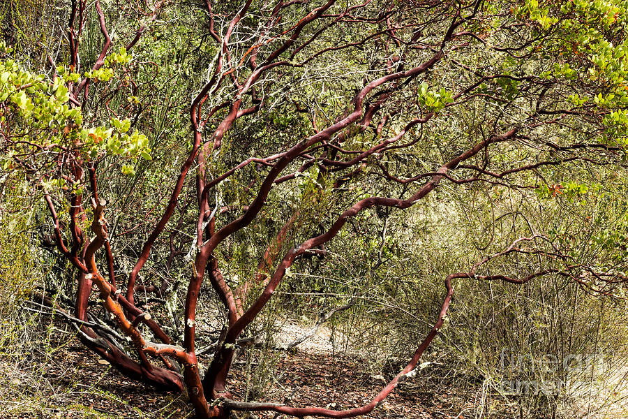 Tangled Up Photograph  - Tangled Up Fine Art Print