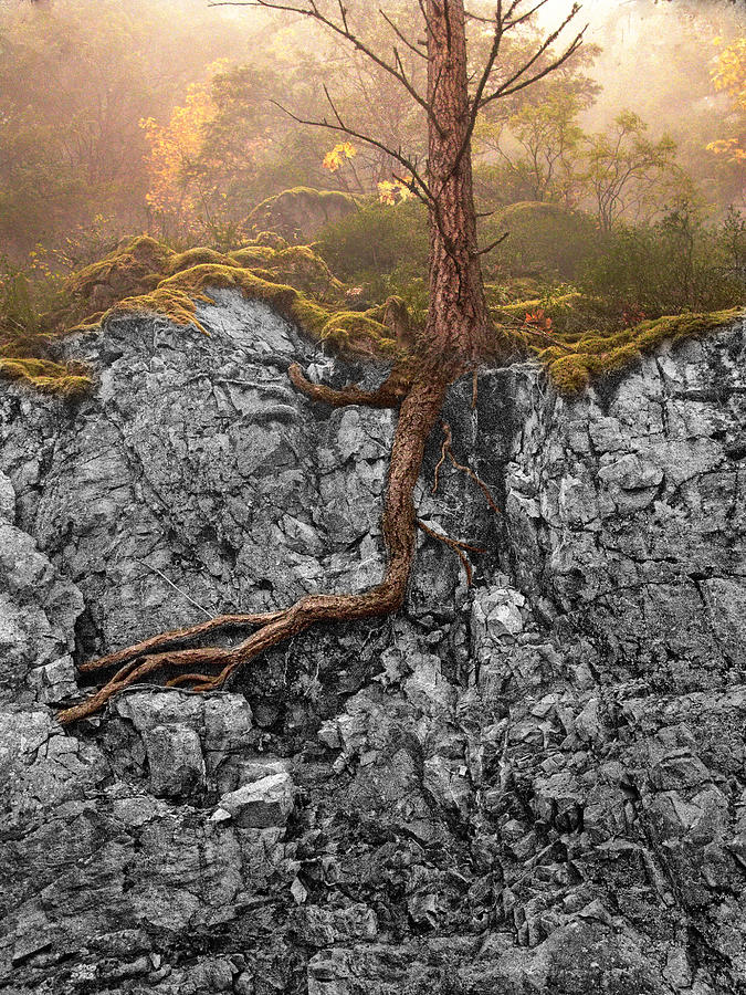 Taproot Photograph