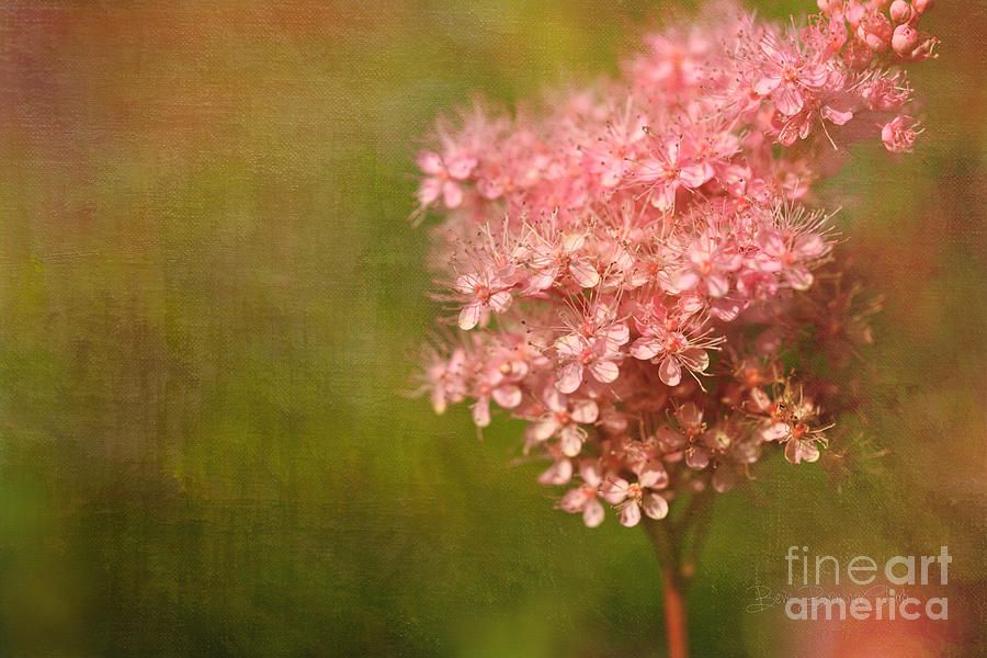Taste Of Summer Photograph  - Taste Of Summer Fine Art Print
