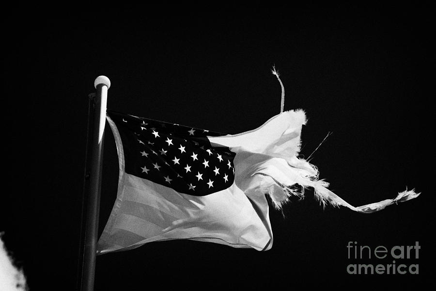 Tattered Torn Worn Us Flag Flying From Flagpole Photograph  - Tattered Torn Worn Us Flag Flying From Flagpole Fine Art Print