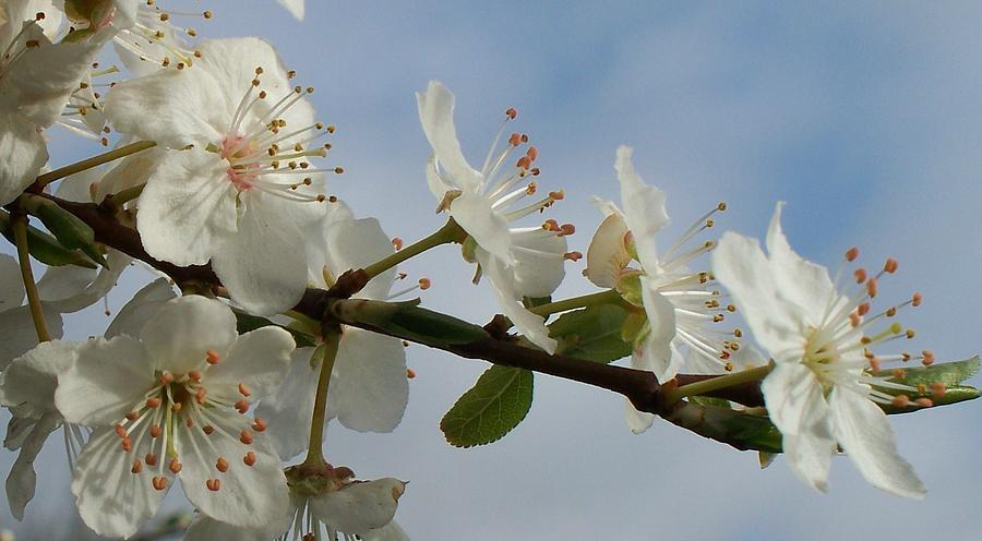 Tea Garden Blooms Photograph