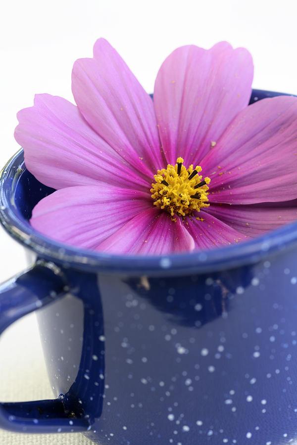 Tea Photograph - Tea Garden by Frank Tschakert