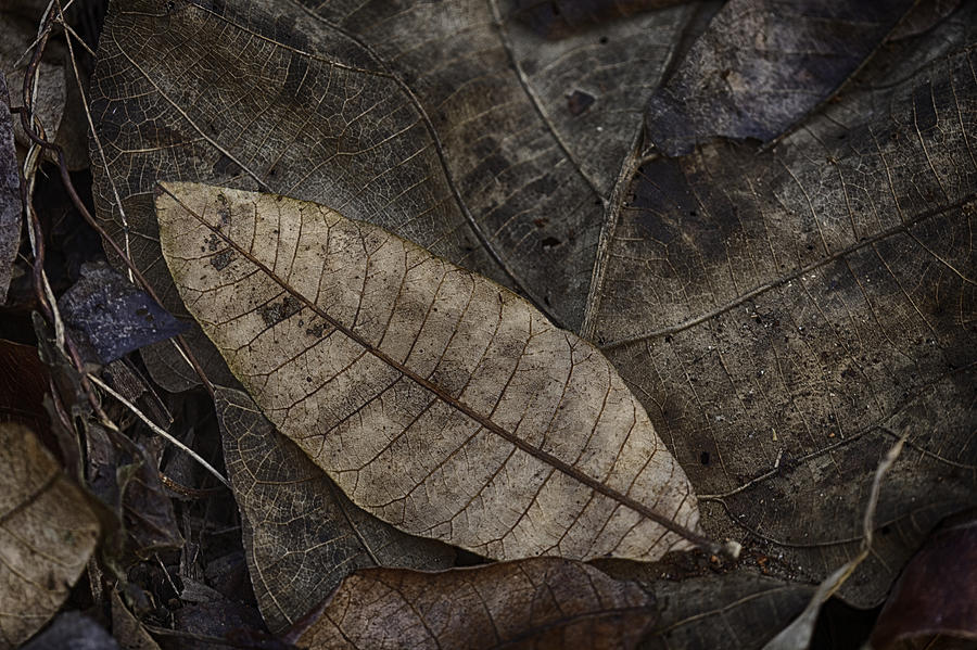 Nature Photograph - Teak And Mango by David Longstreath