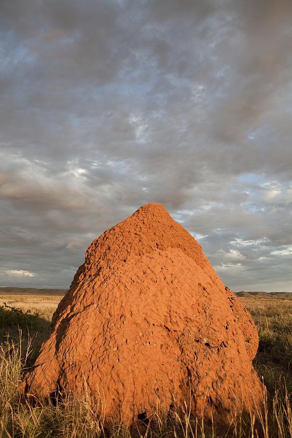 Termite Mound, Exmouth, Australia. Photograph
