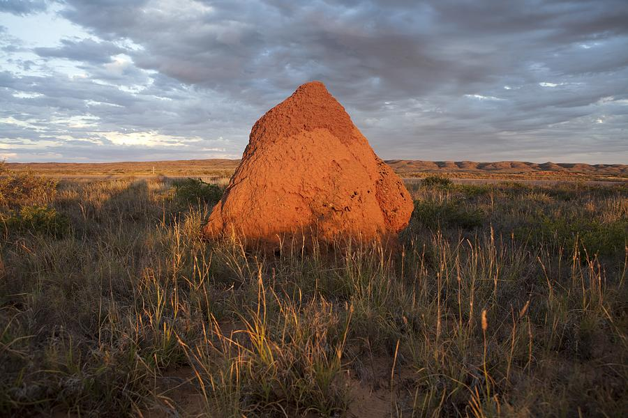 Termite Mound, Exmouth Western Photograph