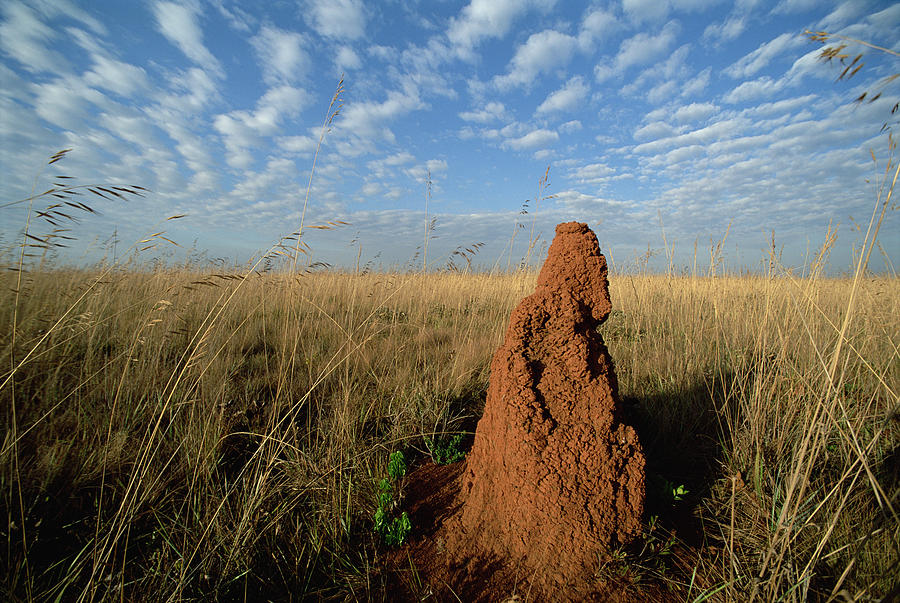 Termite Mound In Cerrado Grassland Emas Photograph
