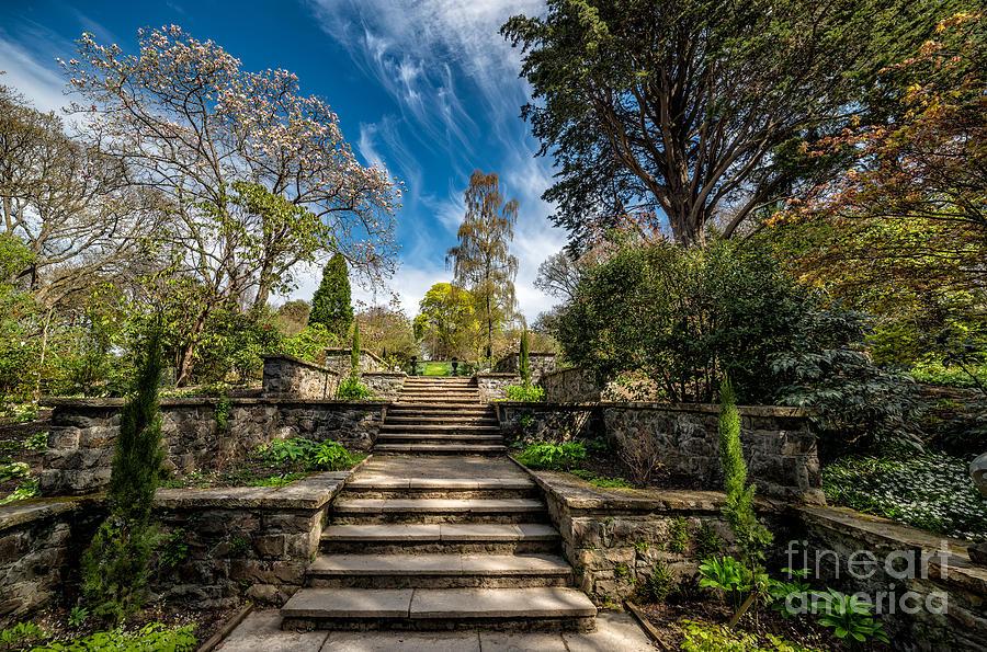 Terrace Garden Photograph