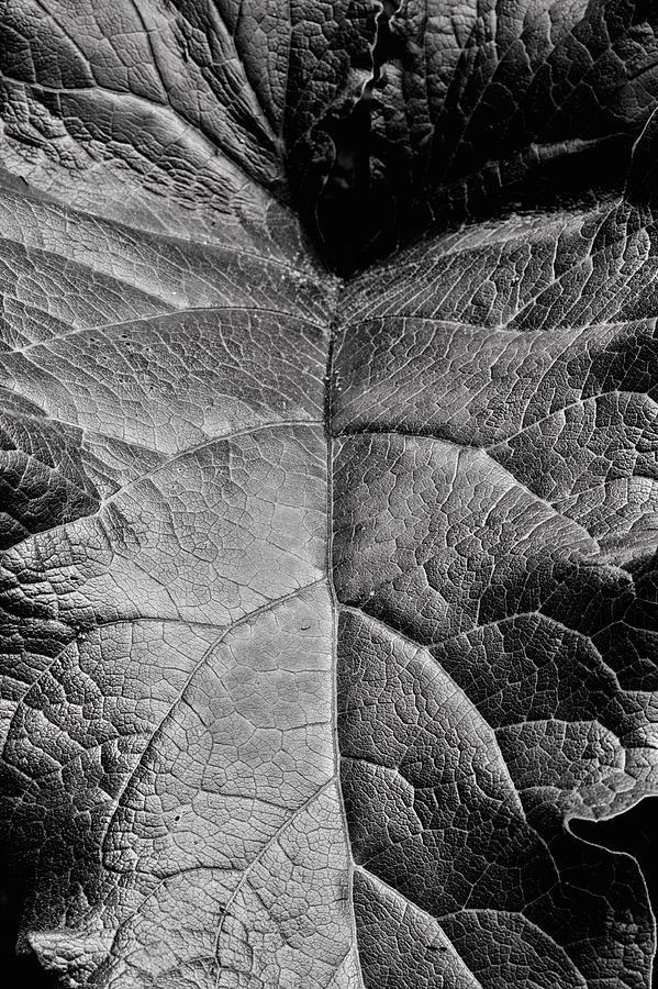 Terrestrial Photograph - Terrestrial  by JC Findley