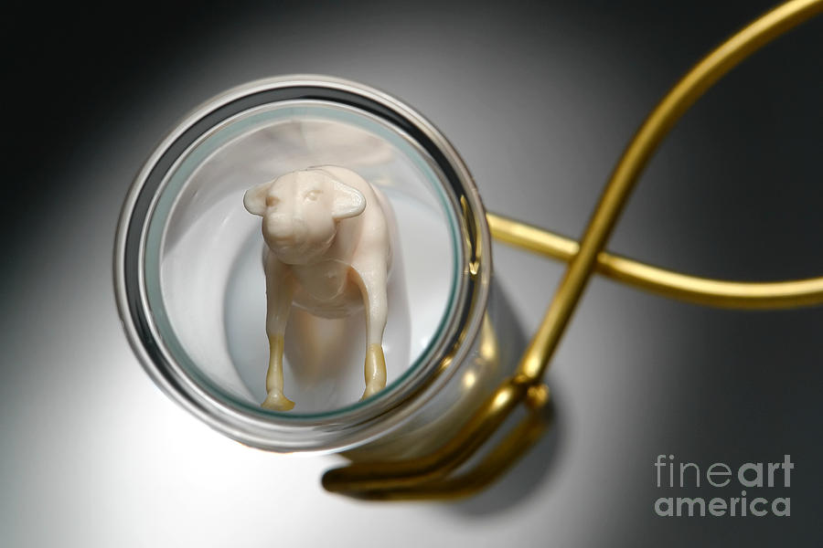 Genetic Photograph - Test Tube Calf by Olivier Le Queinec