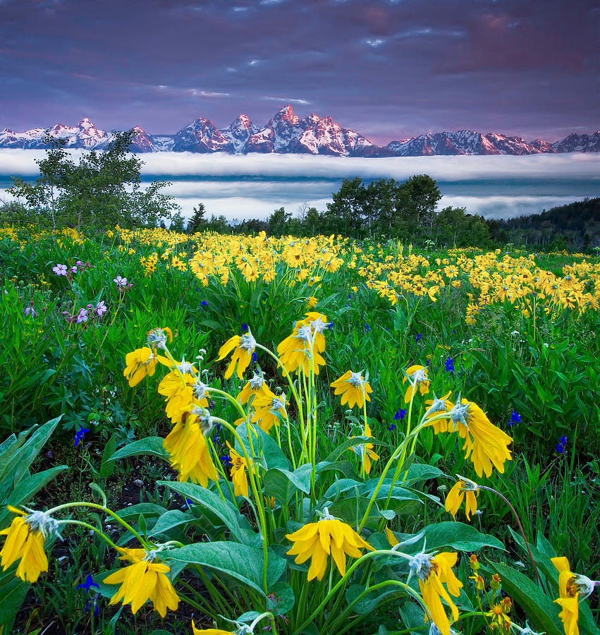 Teton Spring Wildflowers Photograph