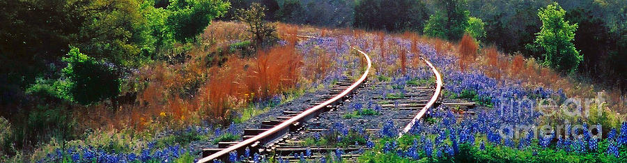 Texas Bluebonnet Railroad Photograph