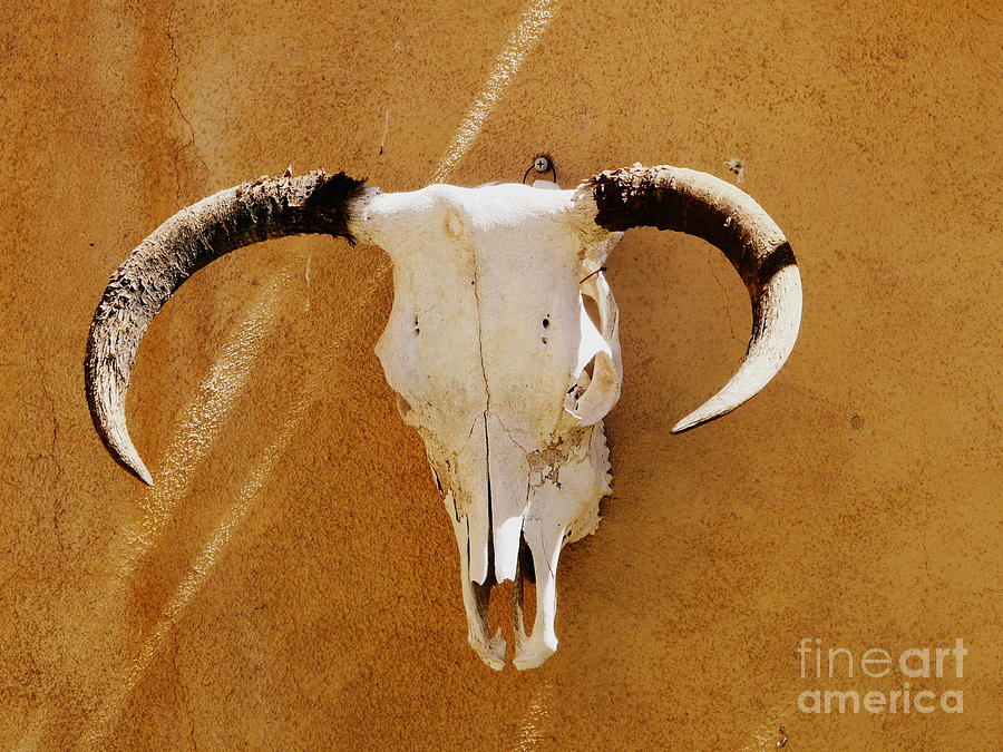Texas Longhorn Photograph