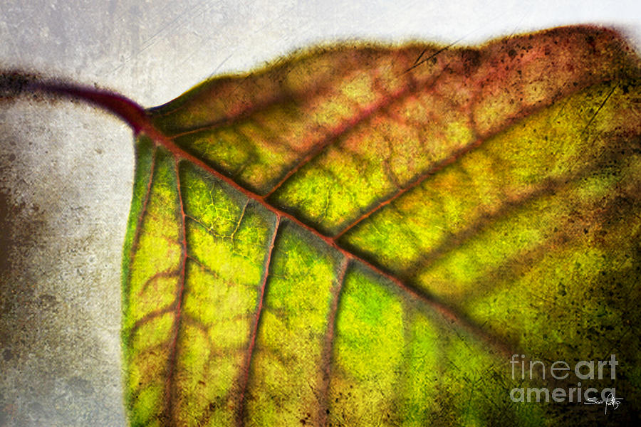 Textured Leaf Abstract Photograph  - Textured Leaf Abstract Fine Art Print