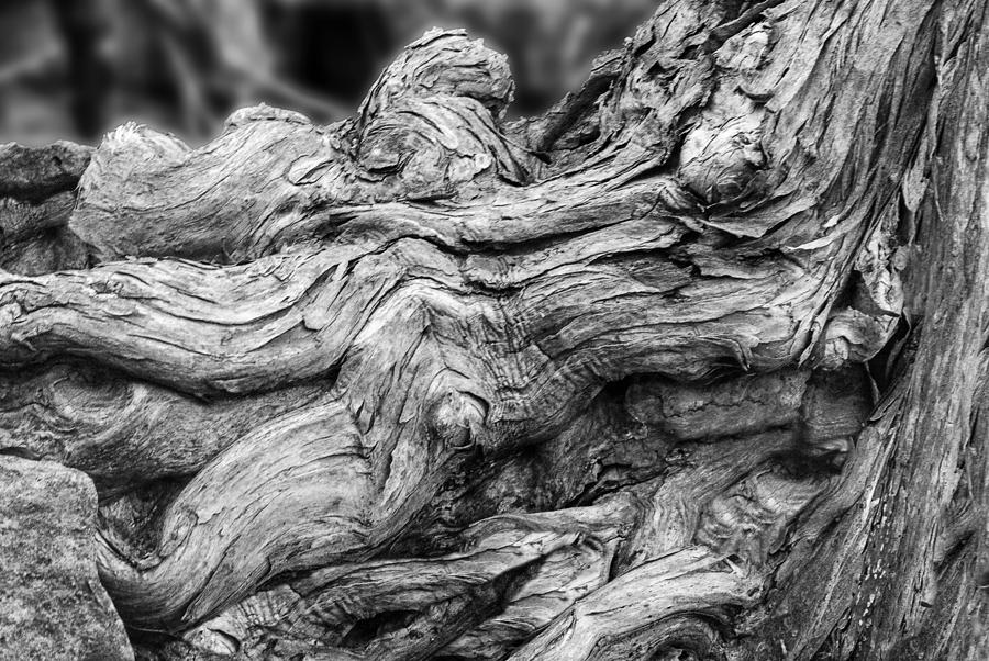 Textures Of Nature Black And White Photograph