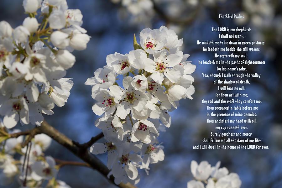 Psalms Photograph - The 23rd Psalms by Kathy Clark