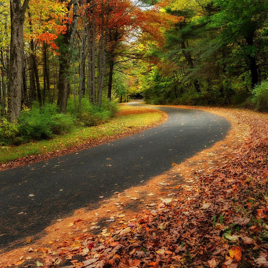 The Autumn Road Square Photograph  - The Autumn Road Square Fine Art Print