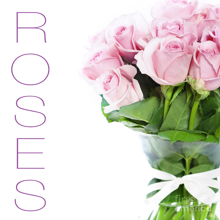 The Beautiful Pink Roses Photograph