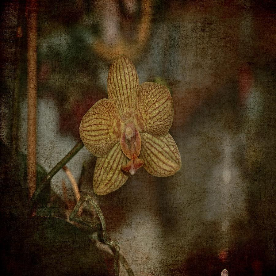 The Beauty Of A Orchid Photograph  - The Beauty Of A Orchid Fine Art Print