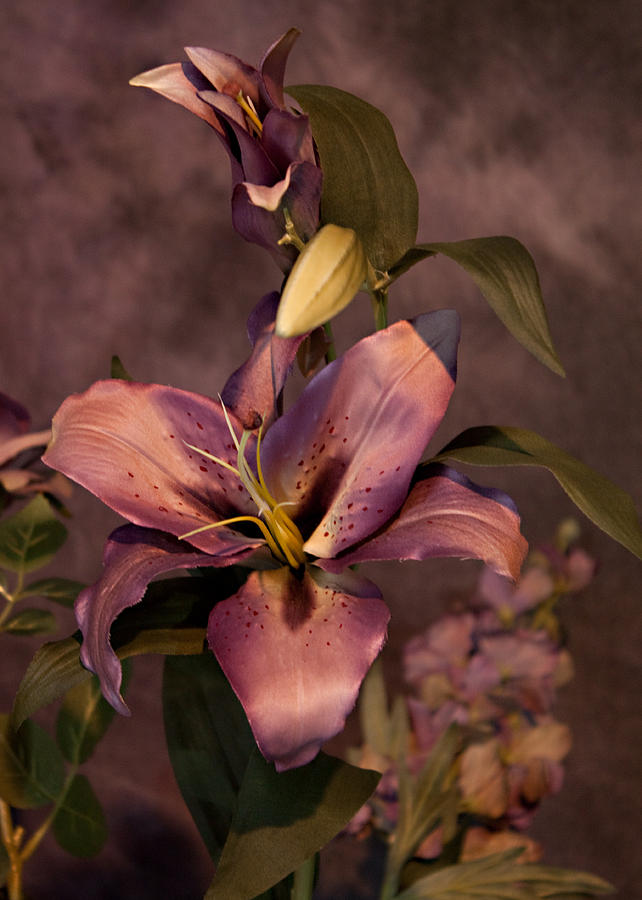 The Beauty Of Lilies Photograph  - The Beauty Of Lilies Fine Art Print