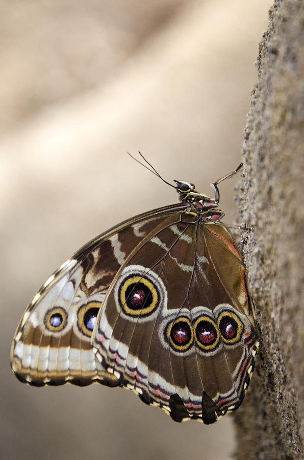 The Beauty Of The Butterfly  Photograph
