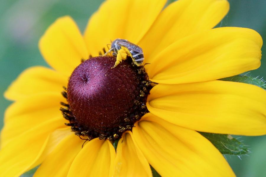 The Bee's Knees by Elizabeth Sullivan