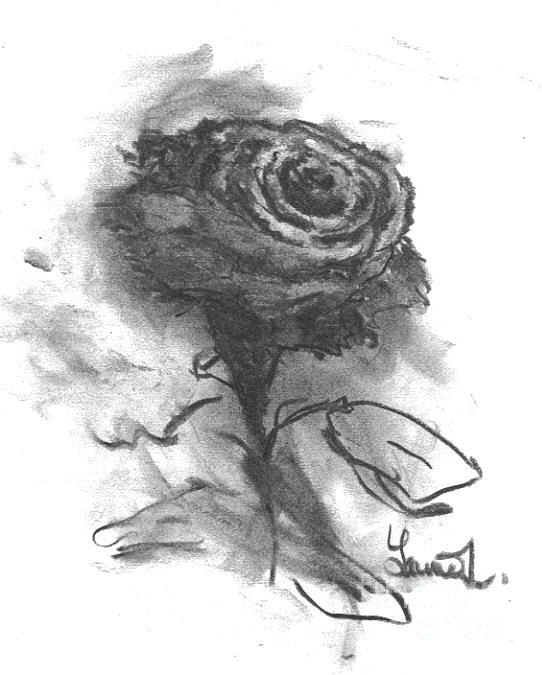The Black Rose Drawing