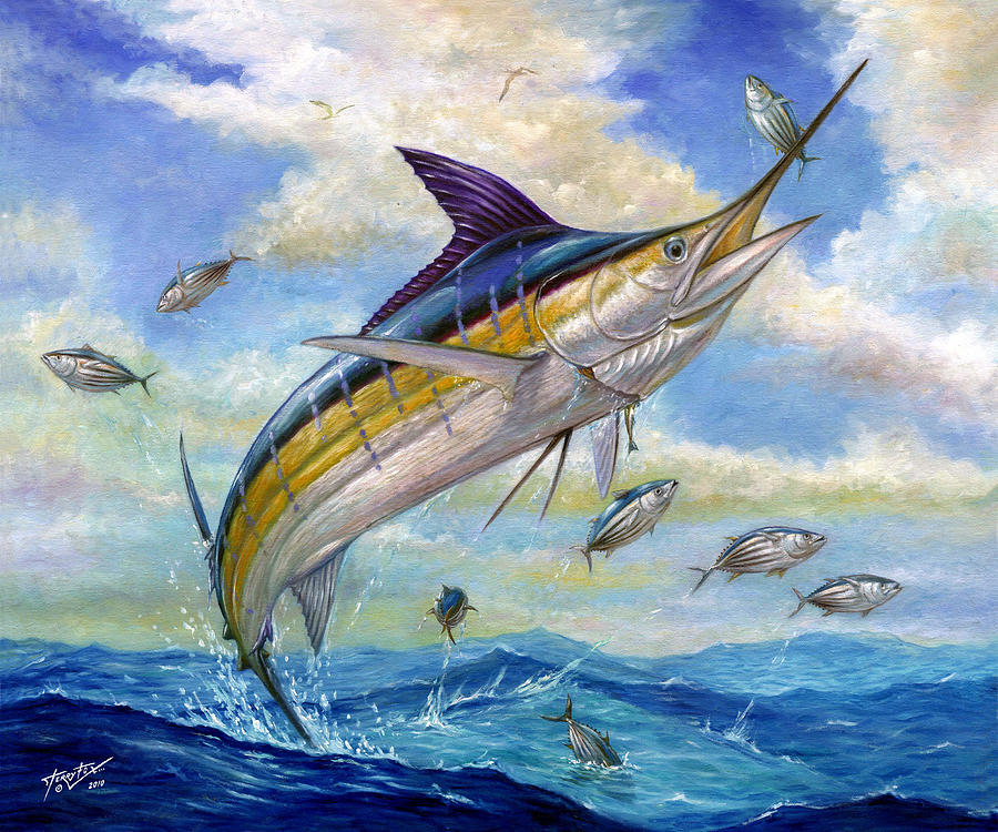 The Blue Marlin Leaping To Eat Painting  - The Blue Marlin Leaping To Eat Fine Art Print