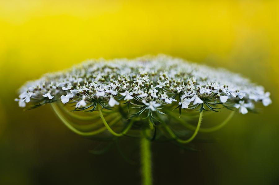 Christi Kraft Photograph - The Bright Side Of Life by Christi Kraft