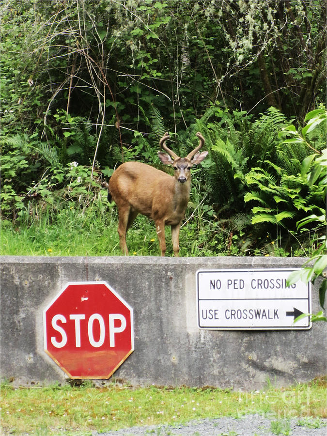 The Buck Stops Here Photograph