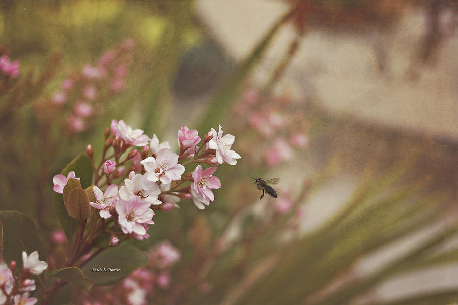 Bee Photograph - The Busy Bee by Angela A Stanton