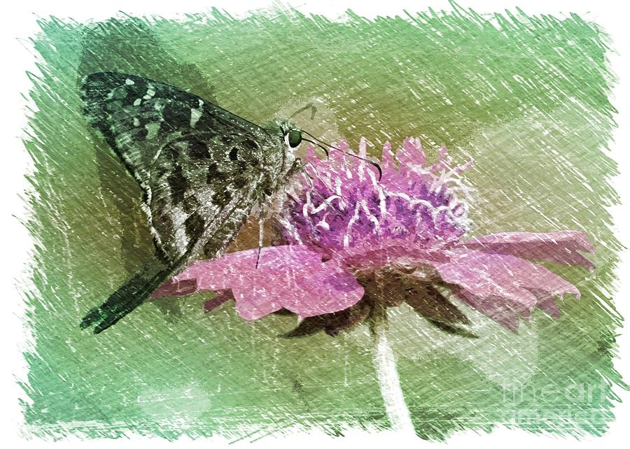 The Butterfly Visitor Photograph  - The Butterfly Visitor Fine Art Print