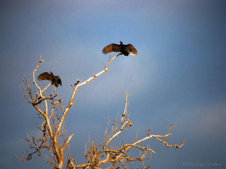 The Buzzard Roost Photograph  - The Buzzard Roost Fine Art Print