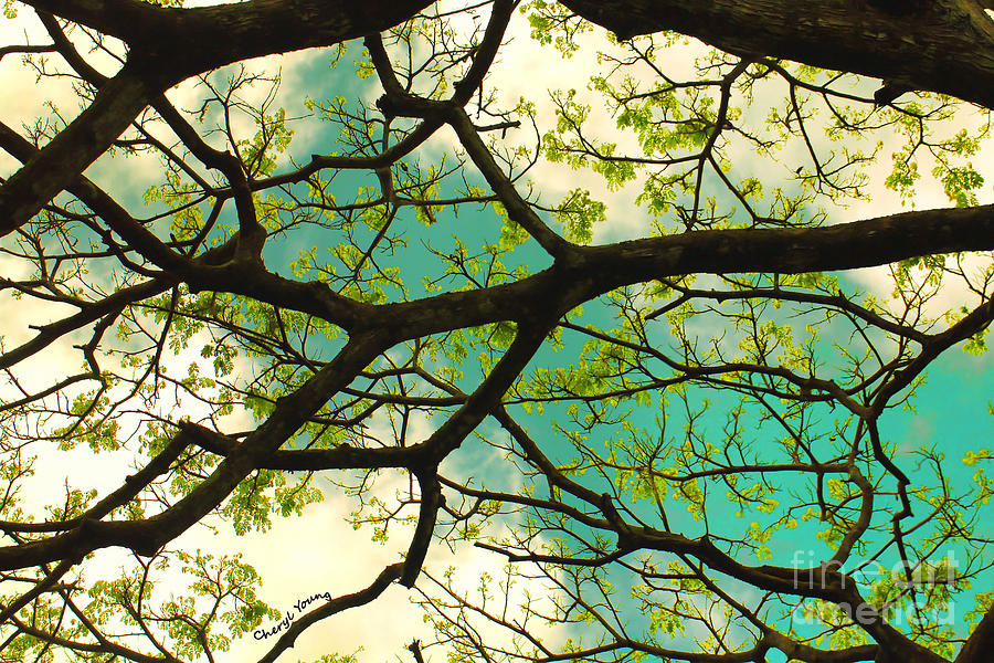 The Canopy Above Photograph  - The Canopy Above Fine Art Print