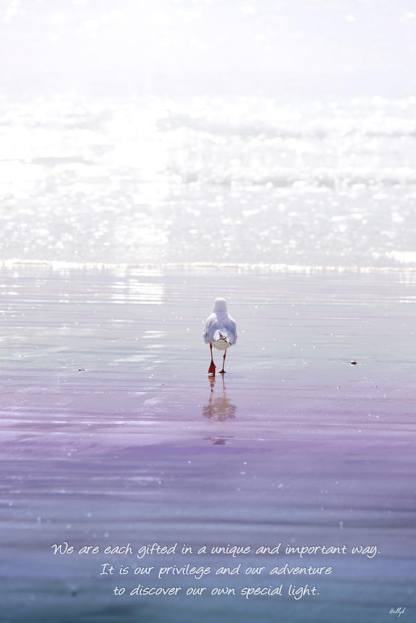 Seagull Photograph - The Chosen One by Holly Kempe