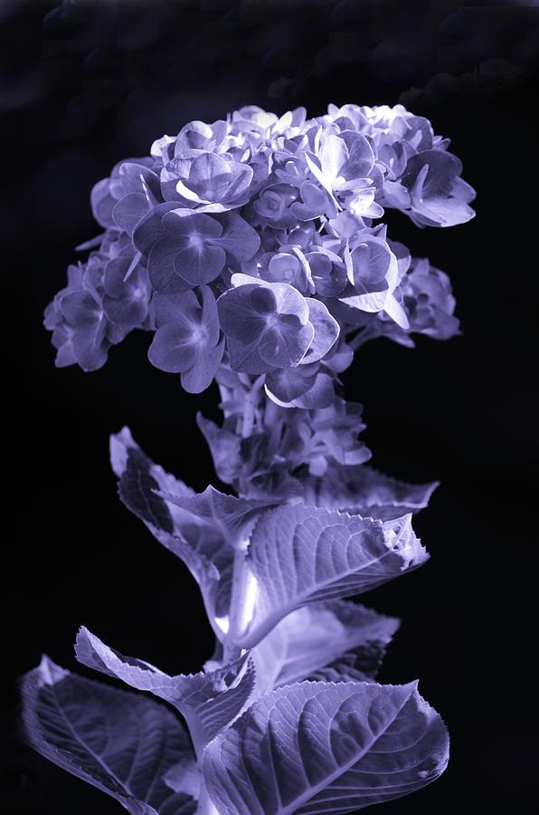 The Color Purple Photograph