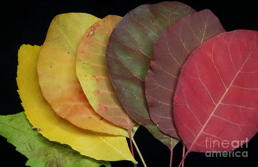 Autumn Photograph - The Colours Of Nature by Stela Taneva
