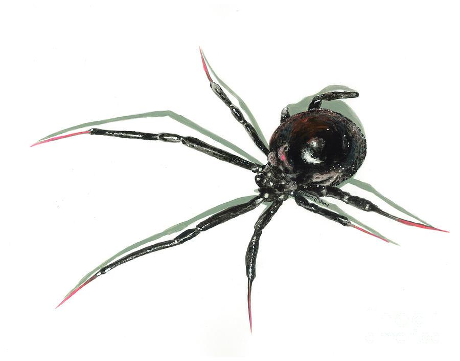 Black Widow Spider Paintings Black Widow Spider Painting