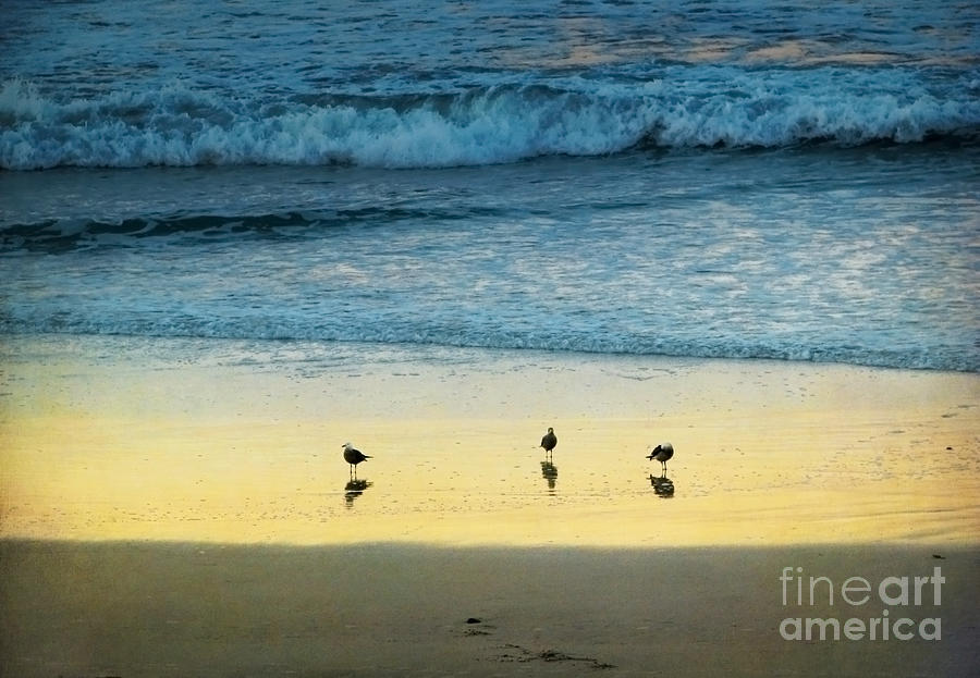 The Early Birds Photograph  - The Early Birds Fine Art Print