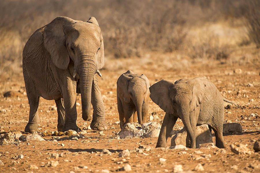 The Elephants Itching Rock Photograph