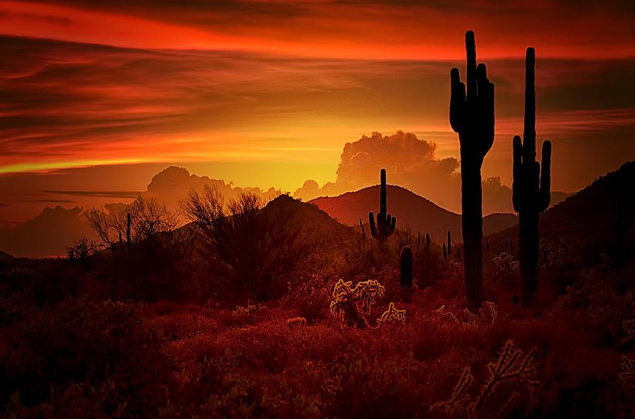 The Essence Of The Southwest Photograph By Saija Lehtonen