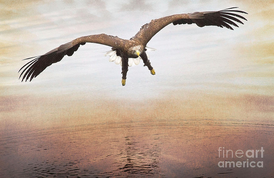 The Evening Eagle Photograph  - The Evening Eagle Fine Art Print