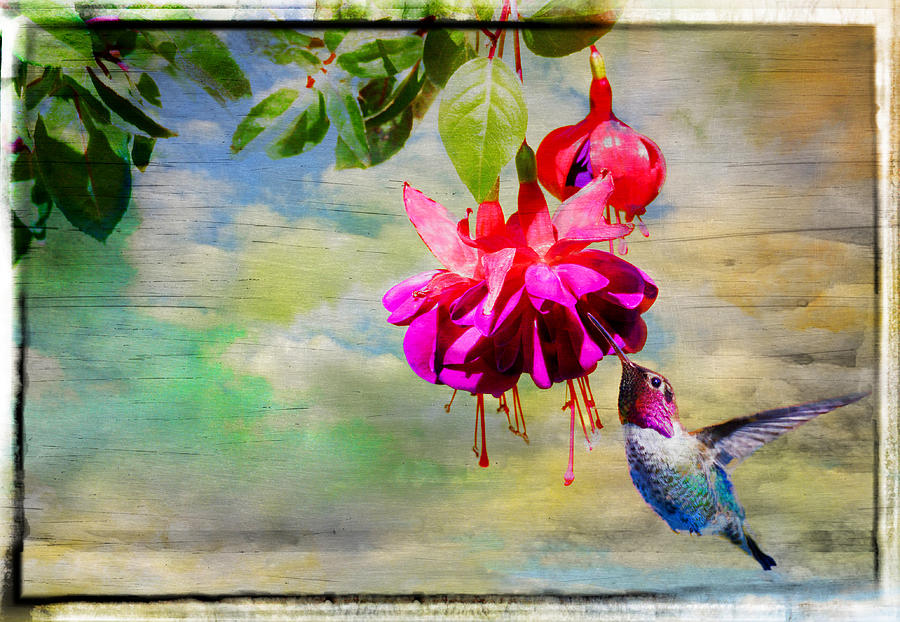 Hummer Photograph - The Face Of Fuchsia by Lynn Bauer